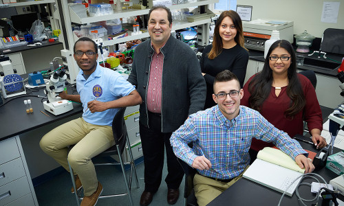 Undergraduate Research Brings Learning to Life