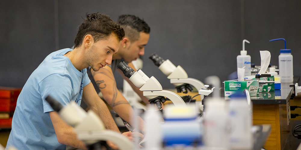 Two Mount students look into microscopes in a laboratory.